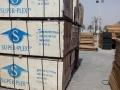 superplex shuttering plywood10.jpg